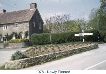 1978 - Newly Planted